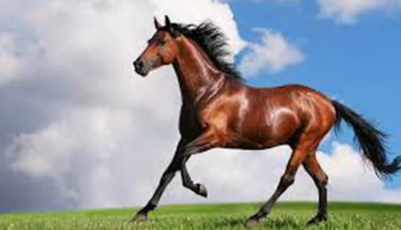 giải mã giấc mơ thấy ngựa