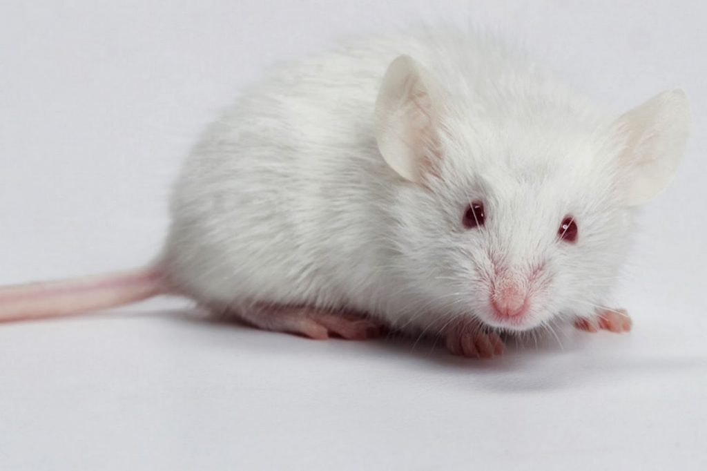 mơ thấy con chuột