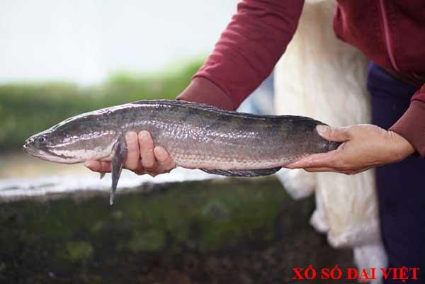 Giải mã nằm mơ thấy cá tràu là điềm báo gì?